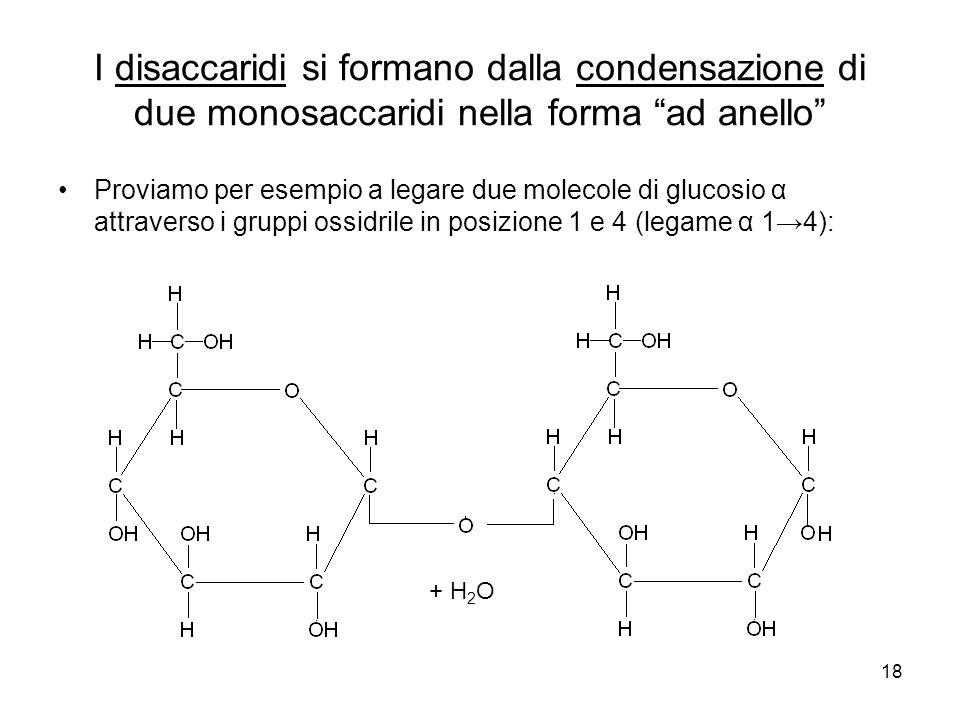 I disaccaridi si formano dalla condensazione di due monosaccaridi nella forma ad anello