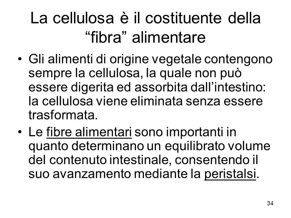 La cellulosa è il costituente della fibra alimentare