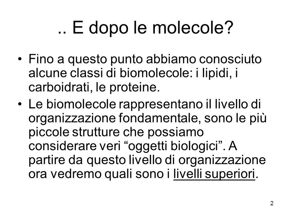 .. E dopo le molecole Fino a questo punto abbiamo conosciuto alcune classi di biomolecole: i lipidi, i carboidrati, le proteine.
