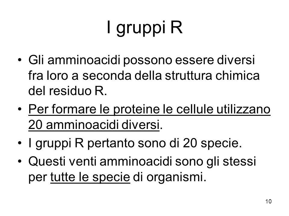 I gruppi R Gli amminoacidi possono essere diversi fra loro a seconda della struttura chimica del residuo R.
