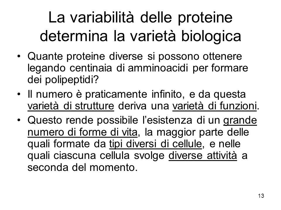 La variabilità delle proteine determina la varietà biologica