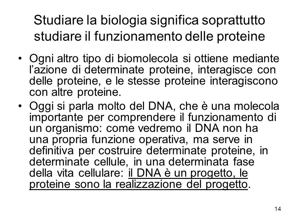 Studiare la biologia significa soprattutto studiare il funzionamento delle proteine