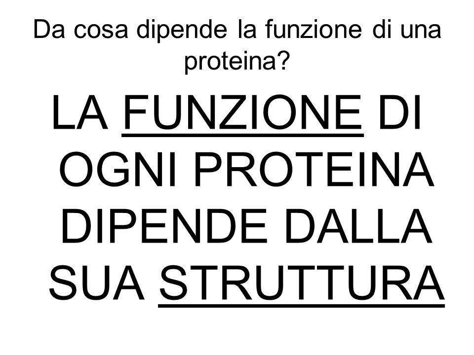 Da cosa dipende la funzione di una proteina