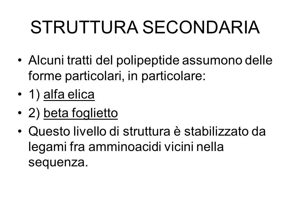 STRUTTURA SECONDARIA Alcuni tratti del polipeptide assumono delle forme particolari, in particolare: