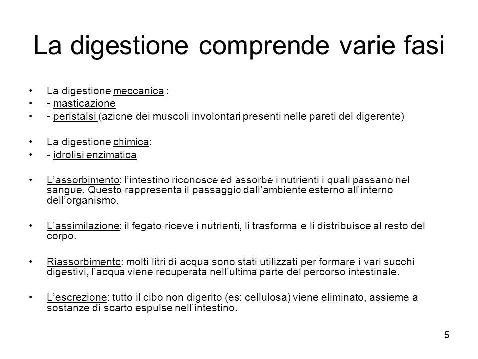 La digestione comprende varie fasi