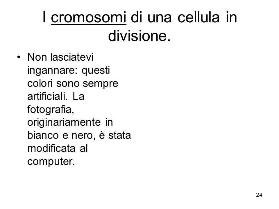 I cromosomi di una cellula in divisione.