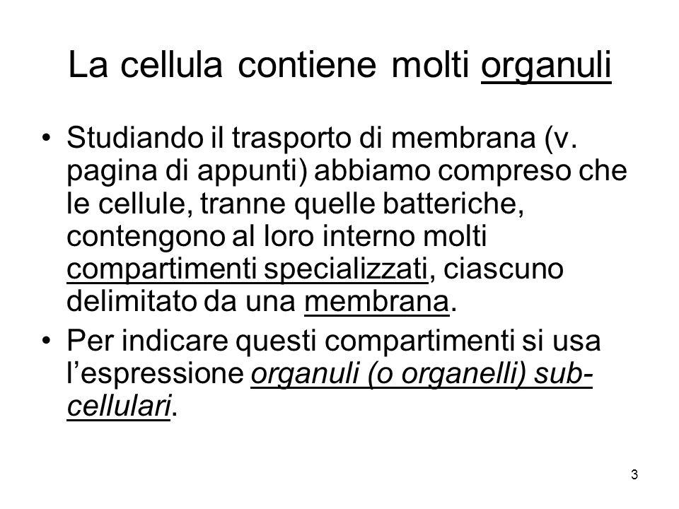 La cellula contiene molti organuli