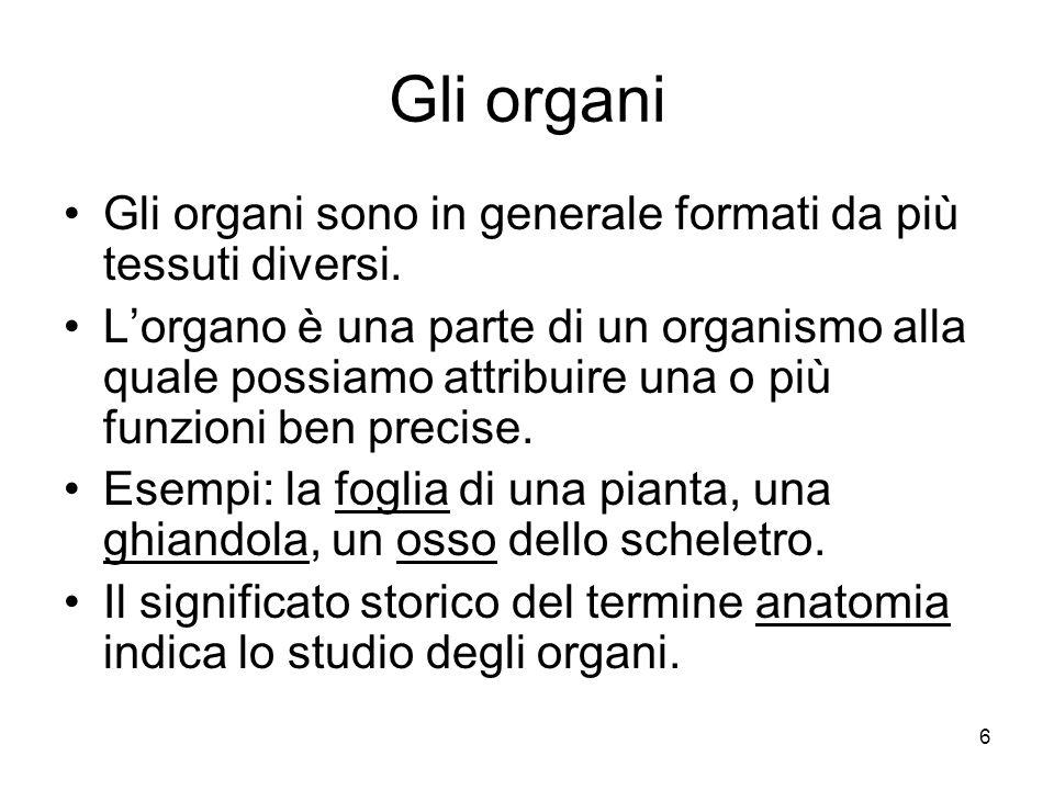 Gli organi Gli organi sono in generale formati da più tessuti diversi.
