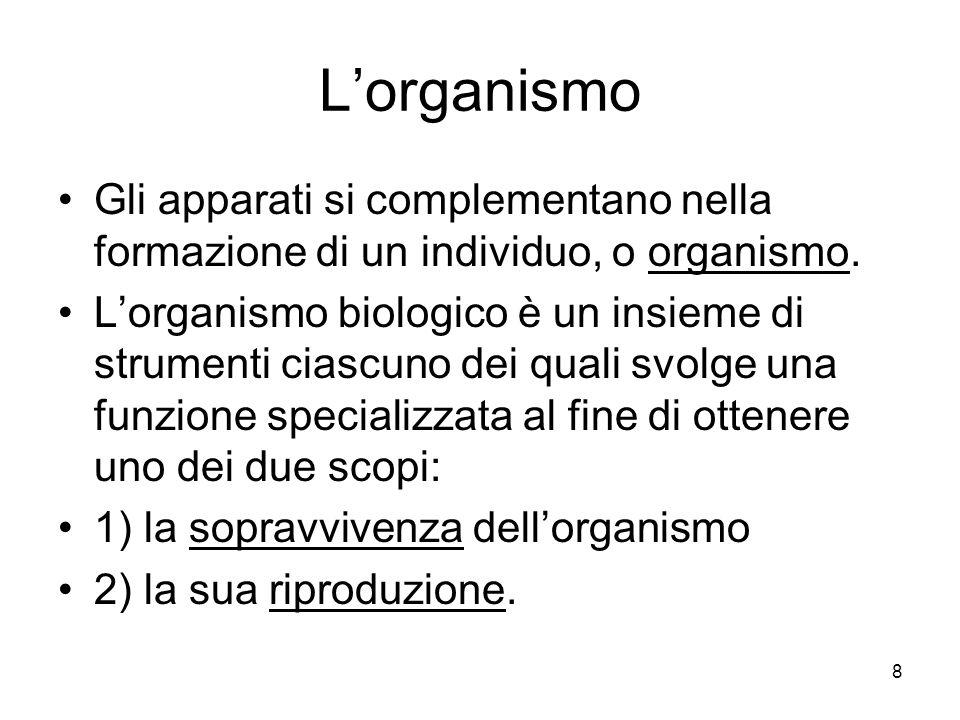 L'organismo Gli apparati si complementano nella formazione di un individuo, o organismo.