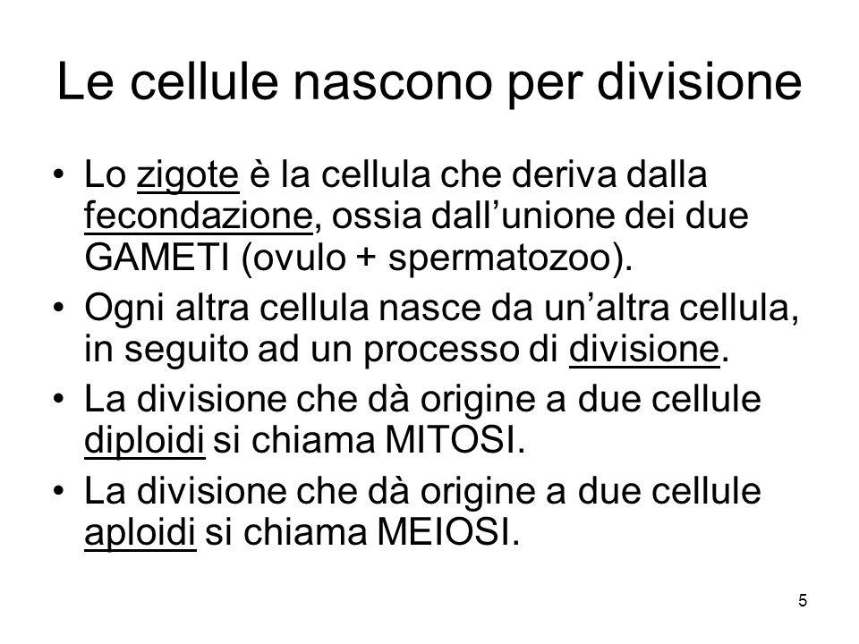 Le cellule nascono per divisione