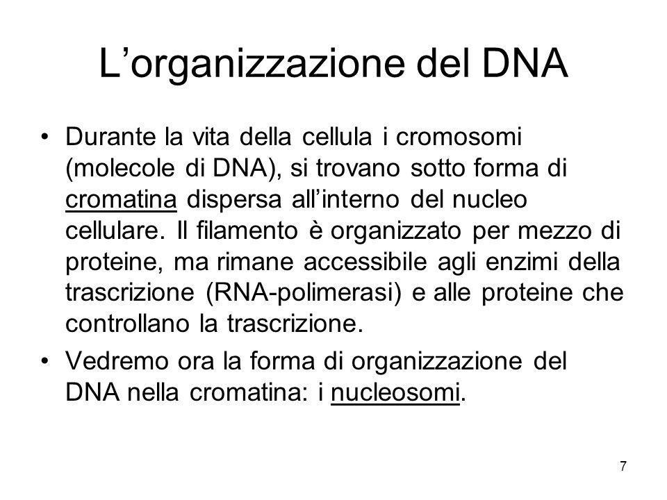 L'organizzazione del DNA