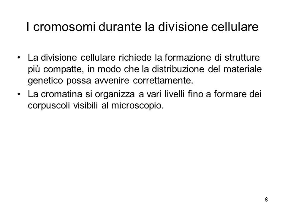 I cromosomi durante la divisione cellulare