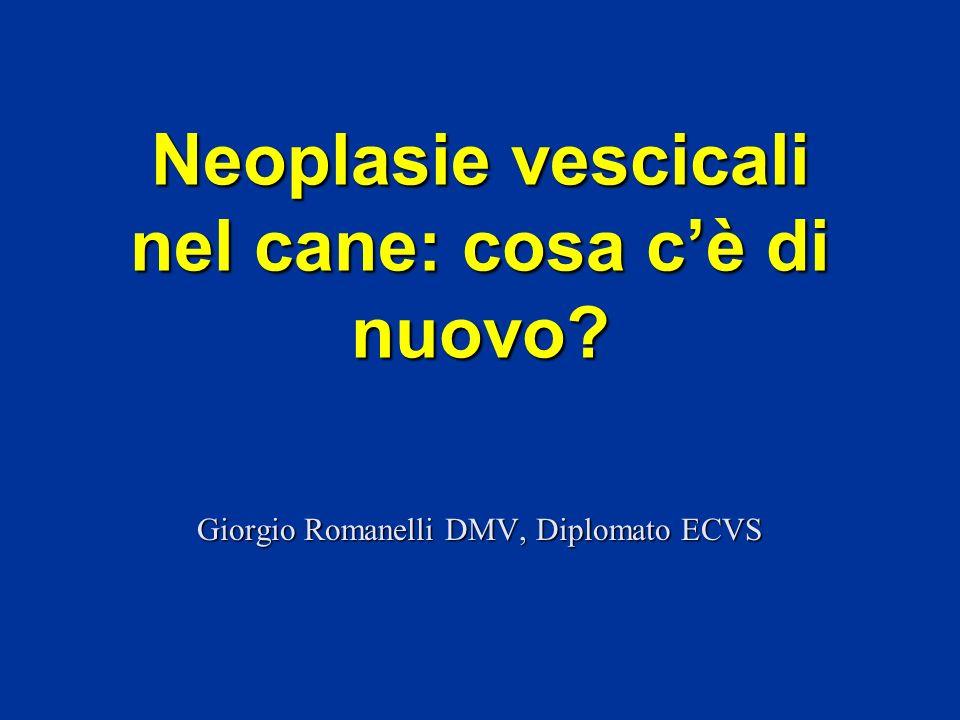 Neoplasie vescicali nel cane: cosa c'è di nuovo