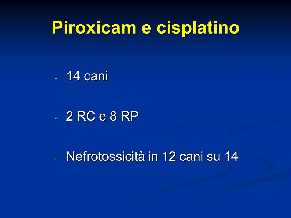 Piroxicam e cisplatino