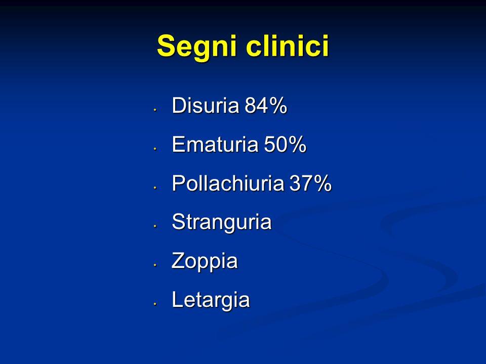 Segni clinici Disuria 84% Ematuria 50% Pollachiuria 37% Stranguria