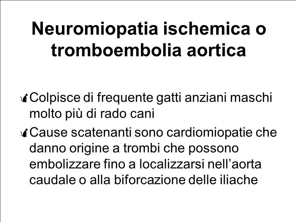 Neuromiopatia ischemica o tromboembolia aortica