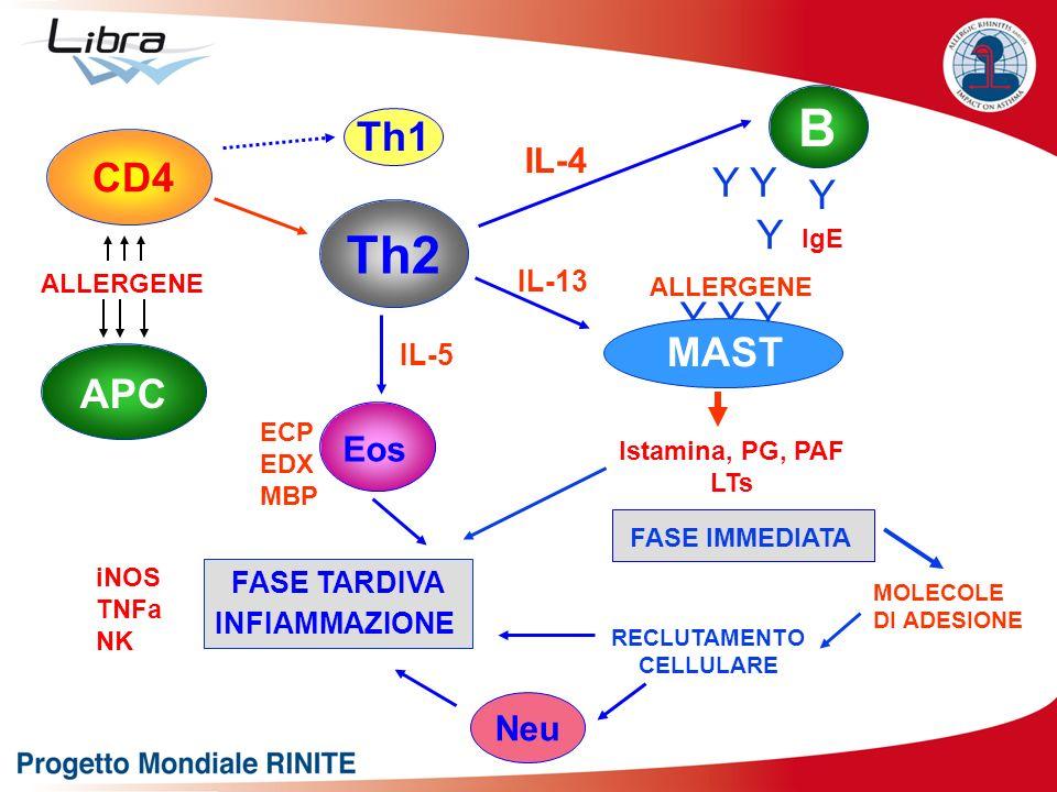 B Th2 Th1 CD4 Y Y Y Y Y Y Y MAST APC IL-4 Eos Neu IL-13 IL-5