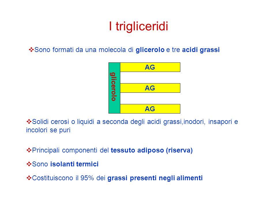 I trigliceridi Sono formati da una molecola di glicerolo e tre acidi grassi. AG. glicerolo. AG. AG.