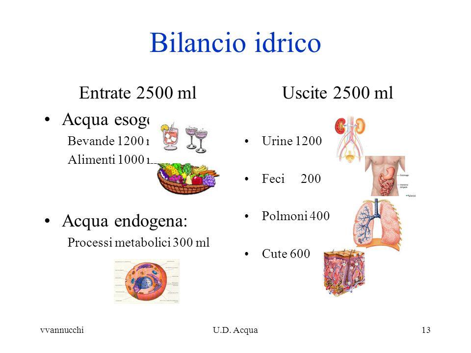 Bilancio idrico Entrate 2500 ml Acqua esogena: Acqua endogena: