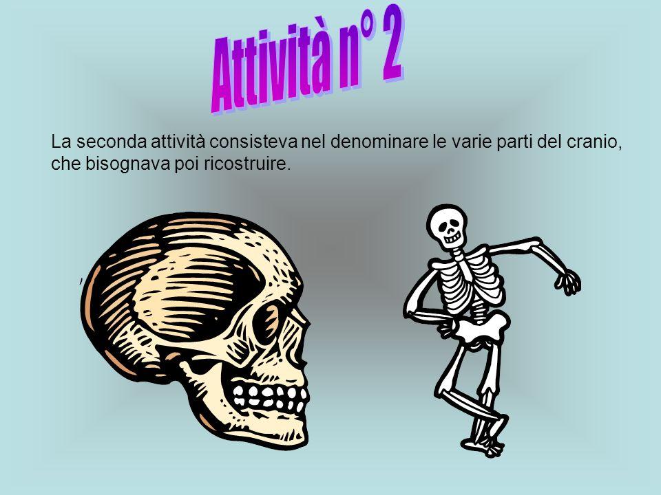 Attività n° 2 La seconda attività consisteva nel denominare le varie parti del cranio, che bisognava poi ricostruire.
