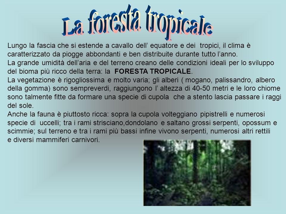 La foresta tropicale Lungo la fascia che si estende a cavallo dell' equatore e dei tropici, il clima è.