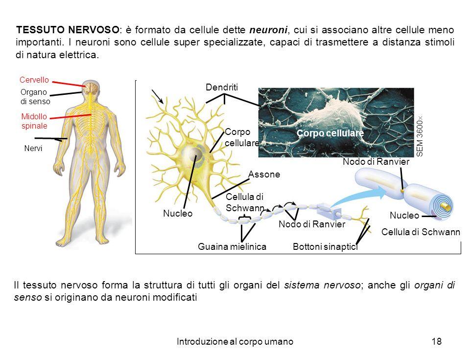 Introduzione al corpo umano