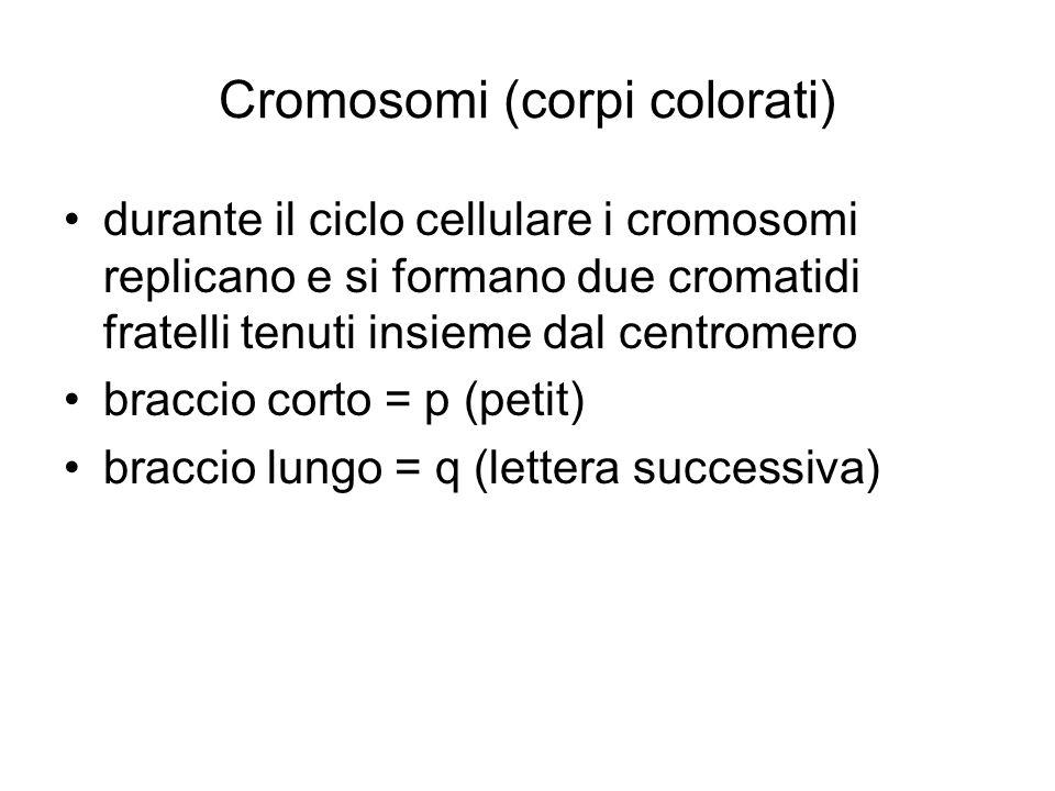 Cromosomi (corpi colorati)
