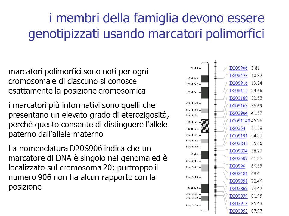 i membri della famiglia devono essere genotipizzati usando marcatori polimorfici