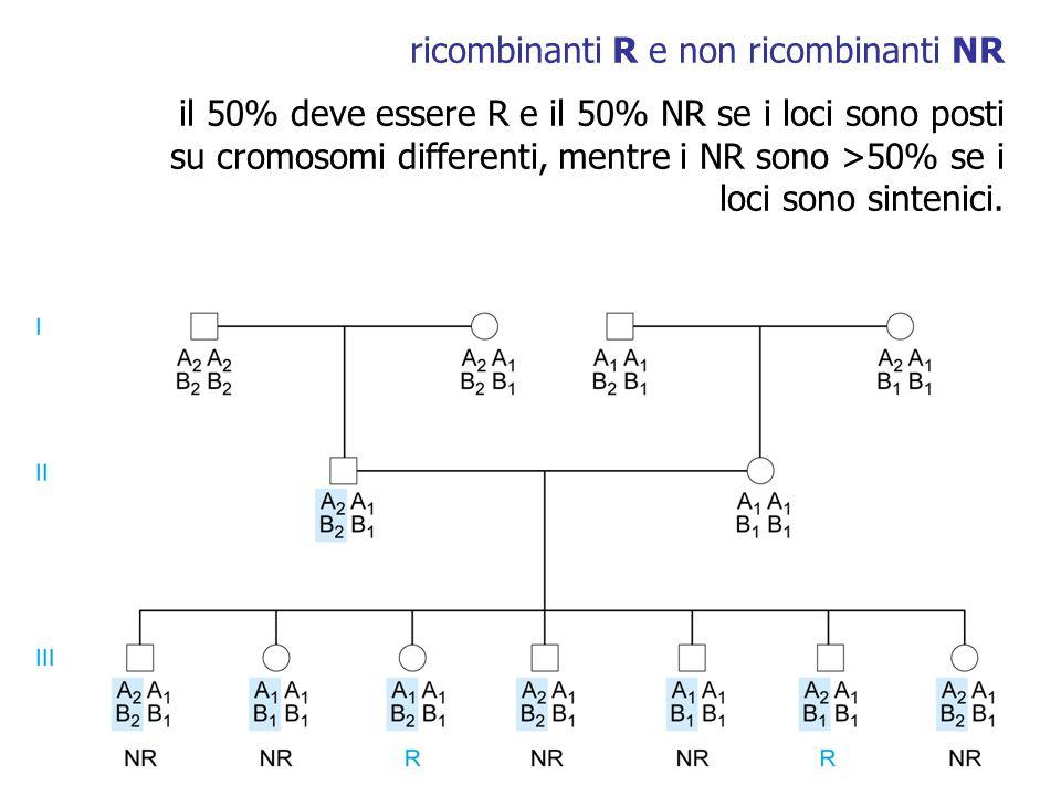 ricombinanti R e non ricombinanti NR