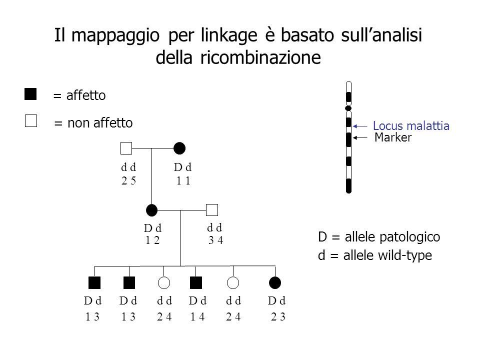 Il mappaggio per linkage è basato sull'analisi della ricombinazione