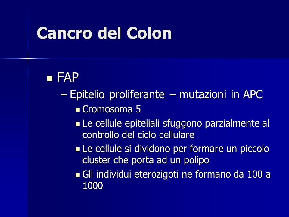 Cancro del Colon FAP Epitelio proliferante – mutazioni in APC