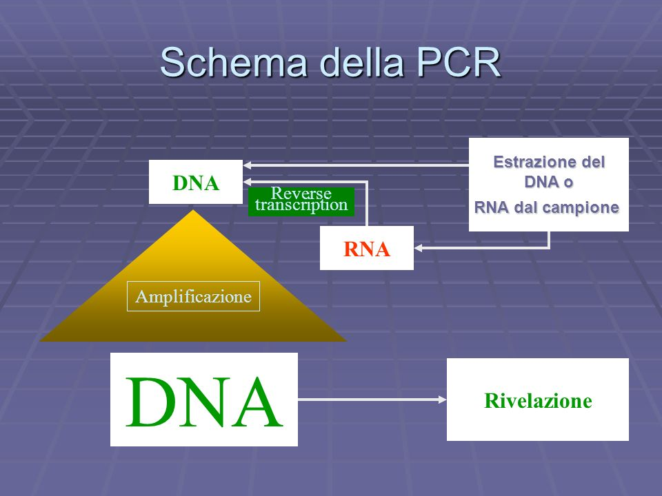 DNA Schema della PCR DNA RNA Rivelazione Reverse transcription