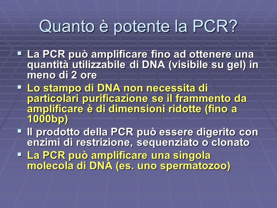 Quanto è potente la PCR La PCR può amplificare fino ad ottenere una quantità utilizzabile di DNA (visibile su gel) in meno di 2 ore.