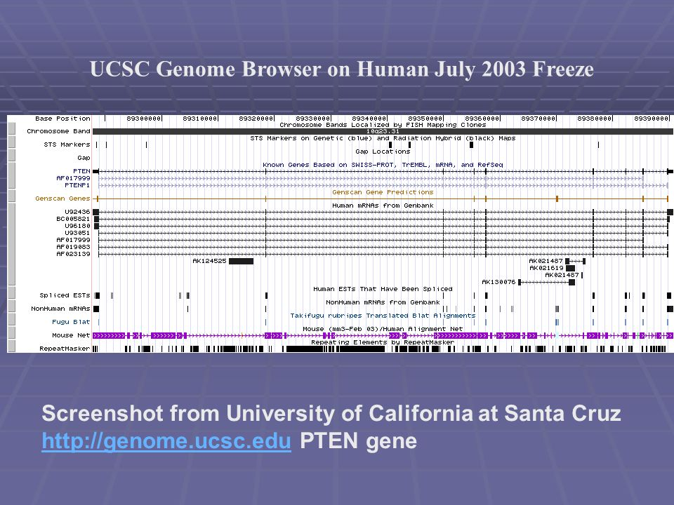 UCSC Genome Browser on Human July 2003 Freeze