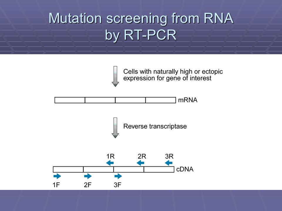 Mutation screening from RNA by RT-PCR