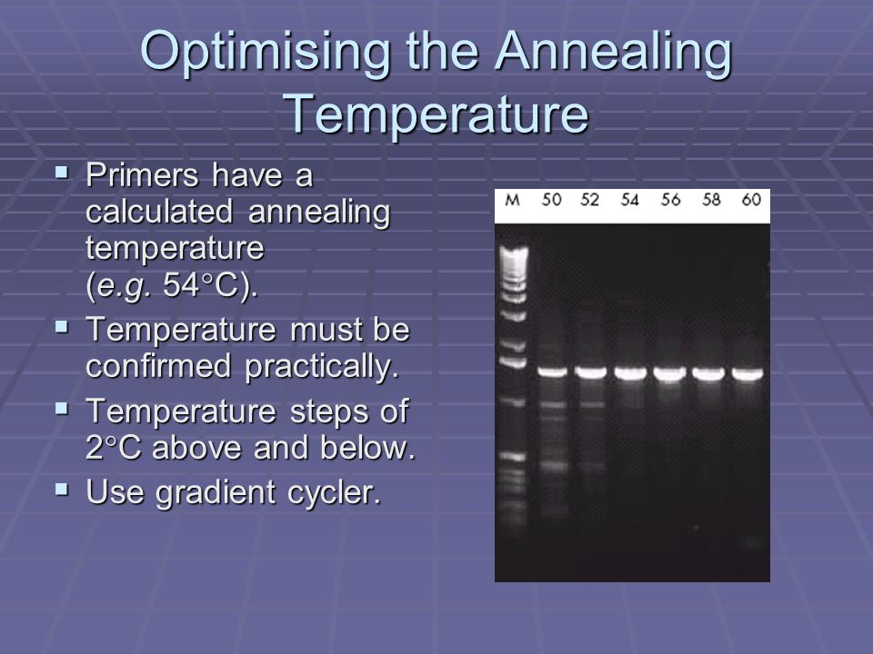 Optimising the Annealing Temperature