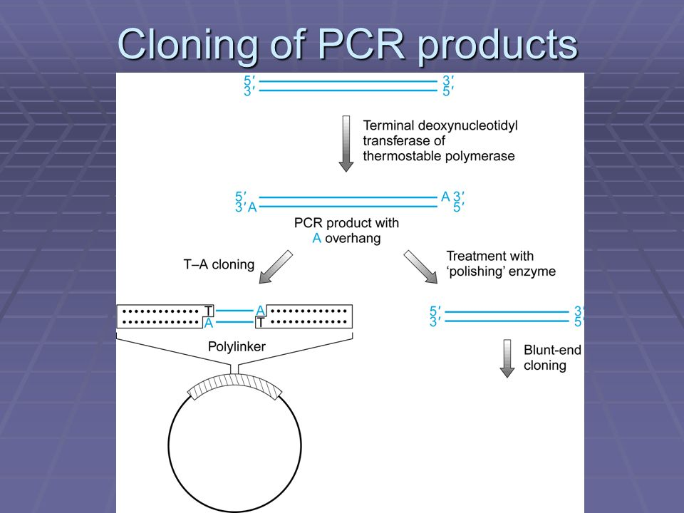 Cloning of PCR products