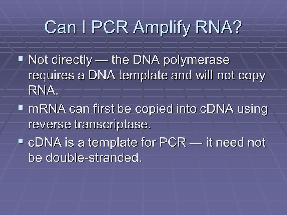 Can I PCR Amplify RNA Not directly — the DNA polymerase requires a DNA template and will not copy RNA.