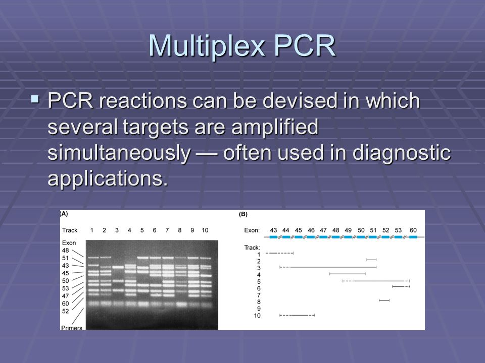 Multiplex PCR PCR reactions can be devised in which several targets are amplified simultaneously — often used in diagnostic applications.