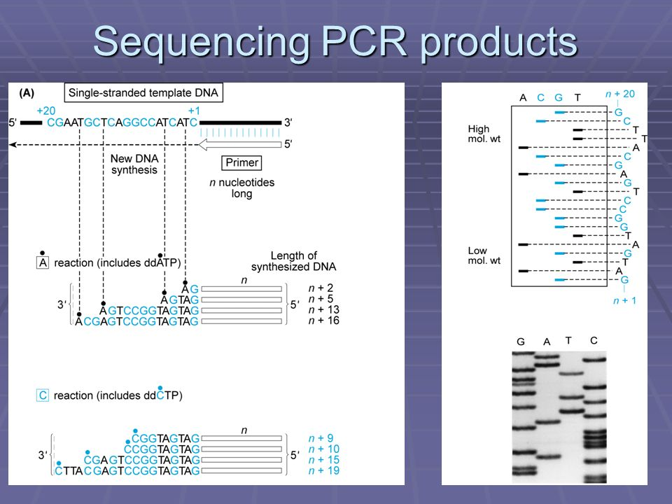 Sequencing PCR products