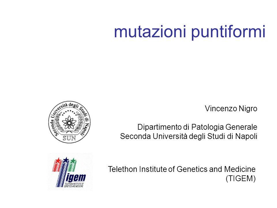 mutazioni puntiformi Vincenzo Nigro Dipartimento di Patologia Generale