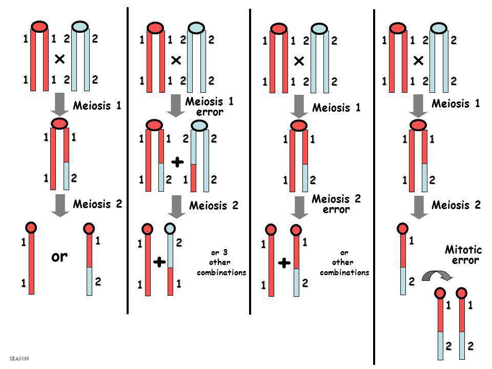 11. 2. 2. 1. 1. 2. 2. 1. 1. 2. 2. 1. 1. 2. 2. 1. 1. 2. 2. 1. 1. 2. 2. 1. 1. 2. 2. 1. 1. 2. 2. Meiosis 1.