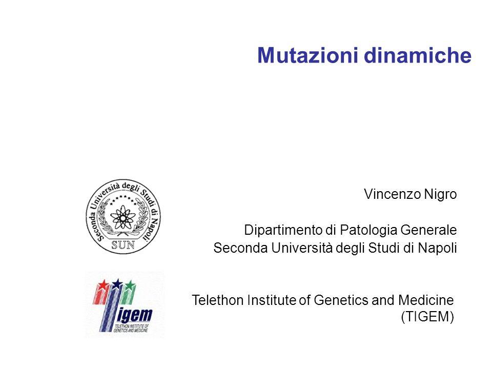 Mutazioni dinamiche Vincenzo Nigro Dipartimento di Patologia Generale
