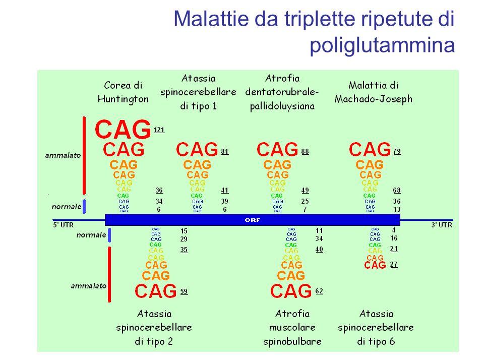 Malattie da triplette ripetute di poliglutammina