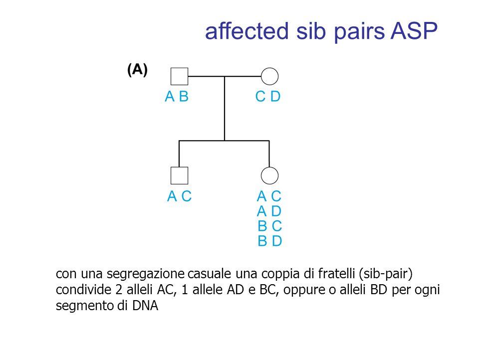 affected sib pairs ASP