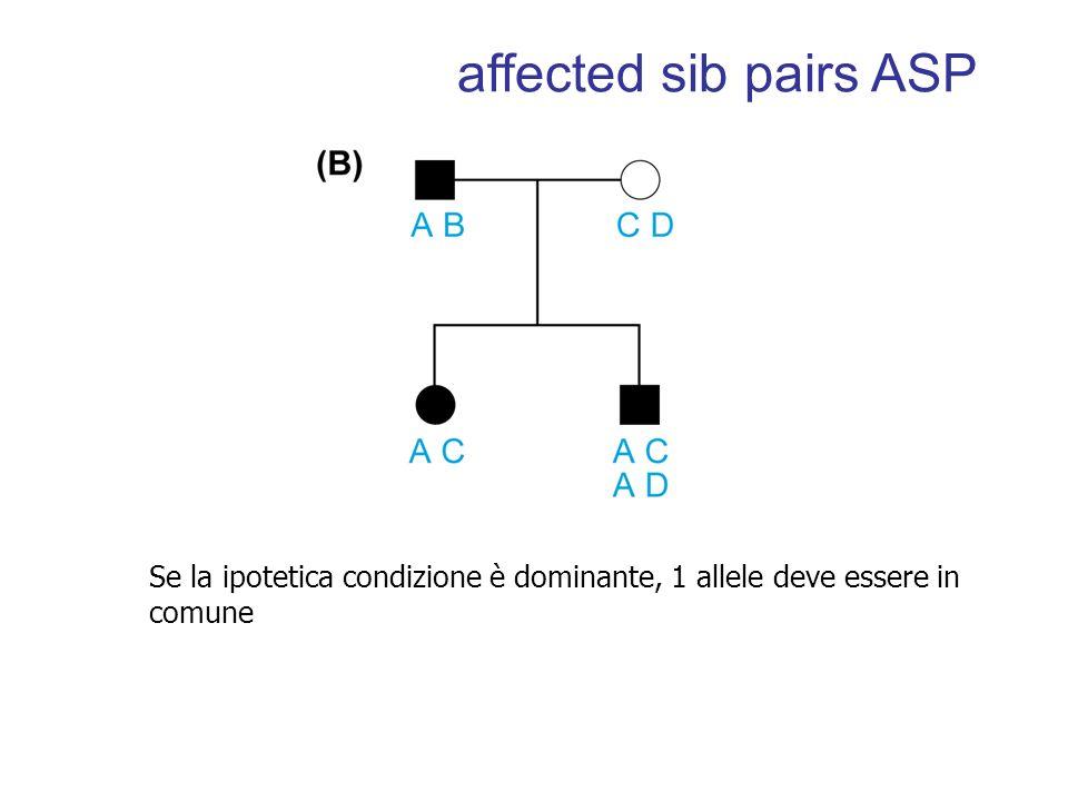 affected sib pairs ASP Se la ipotetica condizione è dominante, 1 allele deve essere in comune