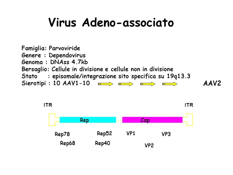 Virus Adeno-associato