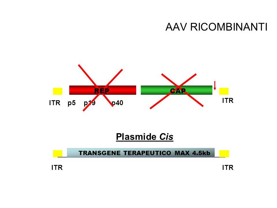TRANSGENE TERAPEUTICO MAX 4.5kb