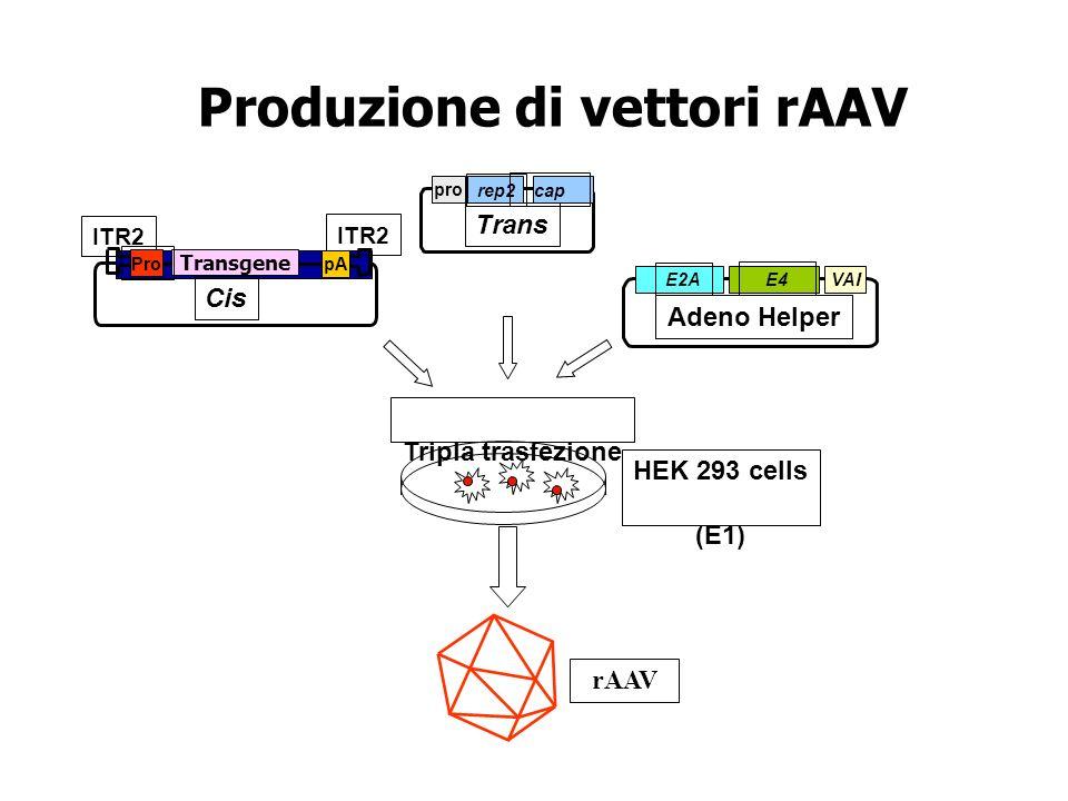 Produzione di vettori rAAV