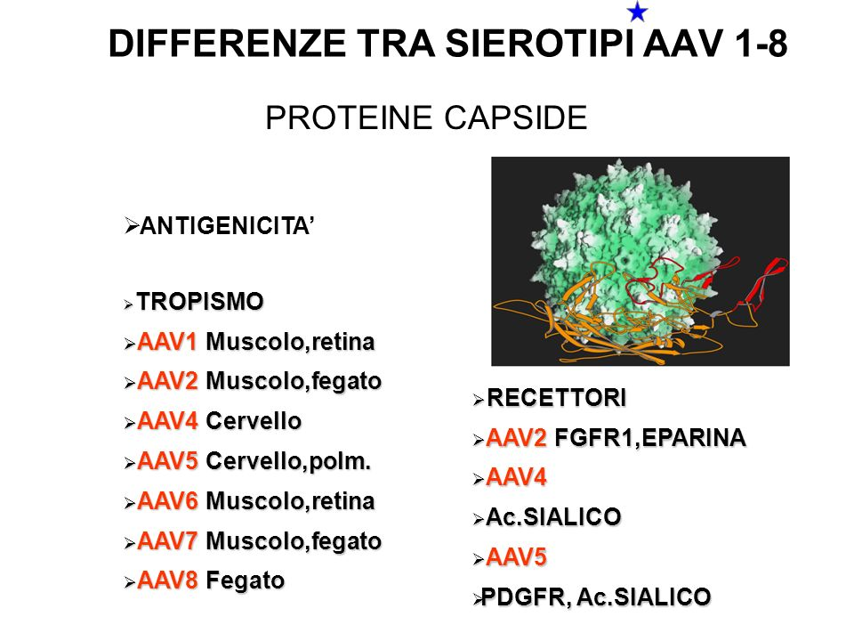 DIFFERENZE TRA SIEROTIPI AAV 1-8